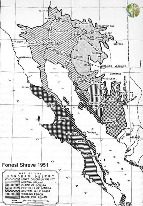 Sonoran Desert Subdivision map, Shreve 1951