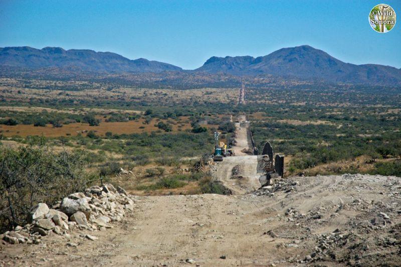 Border wall construction near Sasabe, Arizona/Sonora