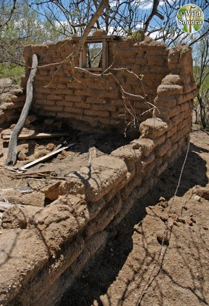Photo: Crumbling adobe at Pozo Verde, Sonora