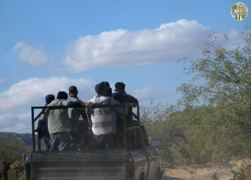 Migrants in pickup truck headed to border