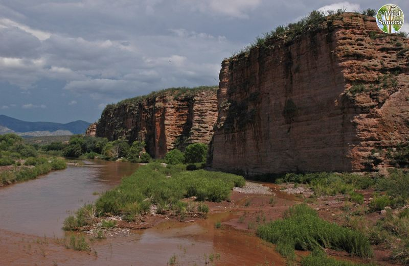 Rio Bavispe and cliffs near Bacerac, Sonora