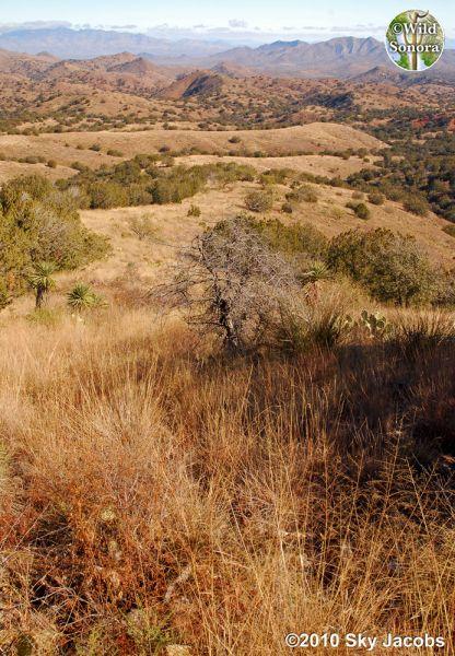 Rosemont Valley in the Santa Ritas