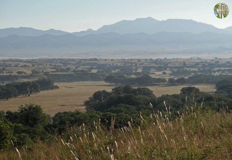 San Rafael Valley, upper Santa Cruz River watershed