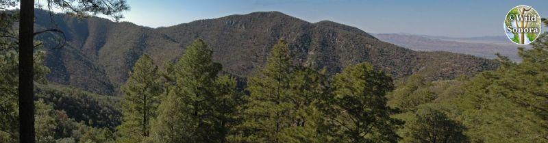 Sierra Pinito panorama