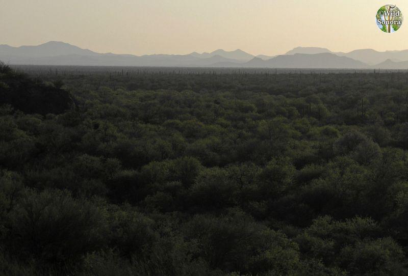 Sonora desert view