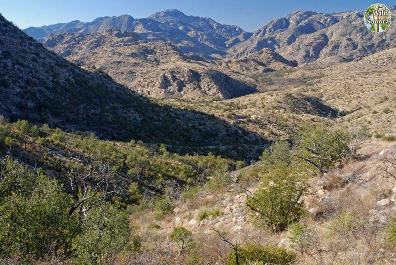Upper Bear Canyon, Santa Catalina Mountains