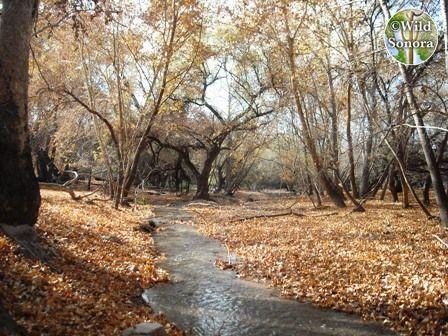 The upper Santa Cruz river near San Lazaro, Sonora