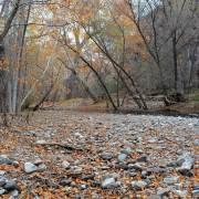 Cajon Bonito creek