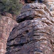 Peregrine Falcon Pair, Devil's Canyon (Gaan Canyon), May 2010
