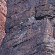 Peregrine Falcon, Devil's Canyon (Gaan Canyon), May 2010