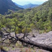 View of the Sierra Bacadehuachi
