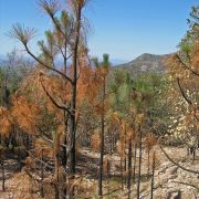 Wildfire in June 2011 in the Sierra Bacadehuachi