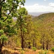 Sierra Cebadilla, Sierra Madre, Sonora