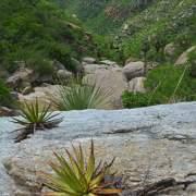 Hugo Canyon, Sierra Mazatán