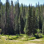 The upper Little Colorado River and spruce