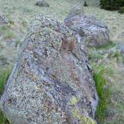 Rock with lichen, White Mountains, Arizona