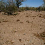 Overgrazed Sonoran Desert