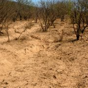 Photo: Heavily overgrazed bottomland in the Sonoran Desert