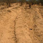 Heavily overgrazed desert soil dust pit