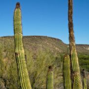 Frost damage on organ pipe