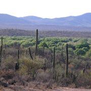 Rio Altar riparian vegetation surrounded by desert, Tubutama, Sonora