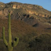 Saguaro and the northern Sierra El Humo