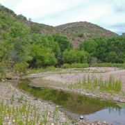 Santa Cruz River, San Lazaro, Sonora