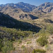 Upper Bear Canyon, Santa Catalina Mountains