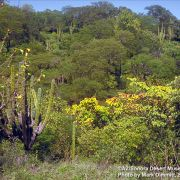 Tropical Deciduous Forest (TDF) - ©AZ/Sonora Desert Museum, Mark Dimmitt 1991