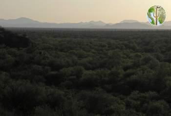 Sonoran Desert, western Sonora
