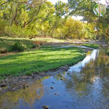 Santa Cruz River at Tubac