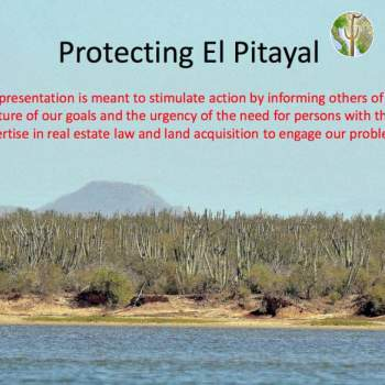 Protecting El Pitayal, conserving coastal thorn-scrub in Sonora.