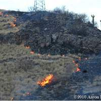 Buffelgrass fire burning in the Sonoran Desert