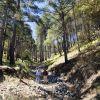 Pine forest - Sierra Purica, Sonora