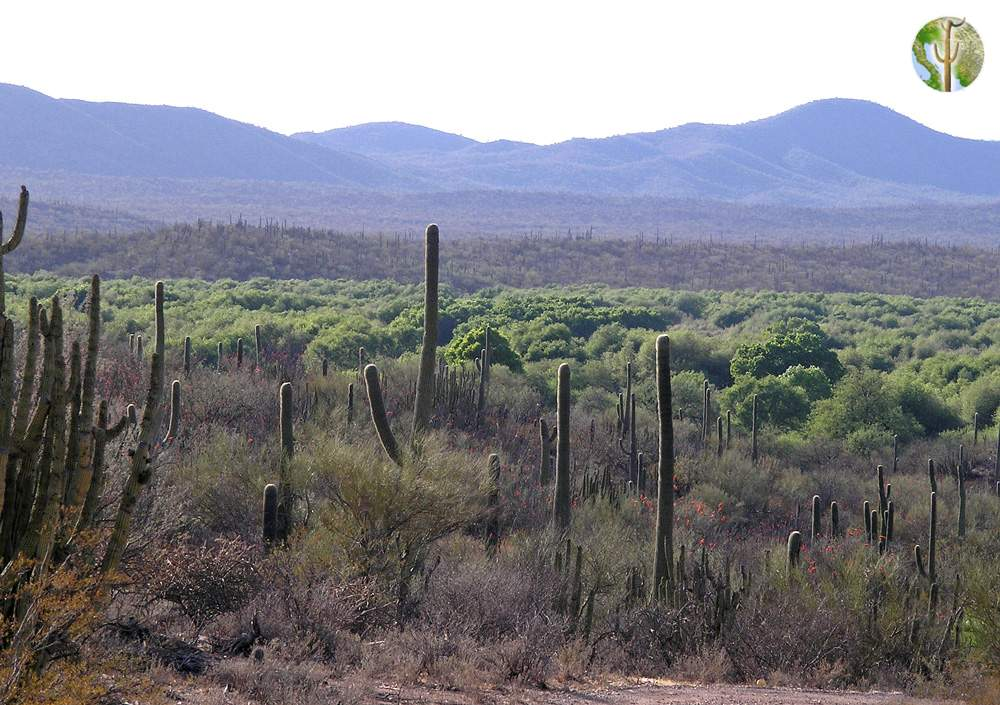 Rio Altar riparian vegetation surrounded by desert, Tubutama, Sonora