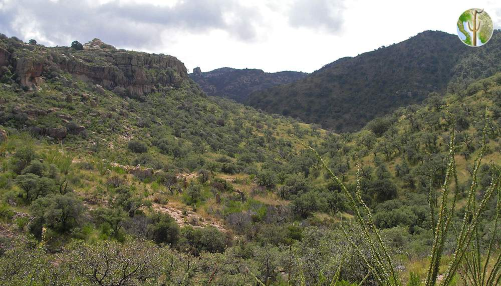 Tumacacori Highlands, Atascosa Mountains